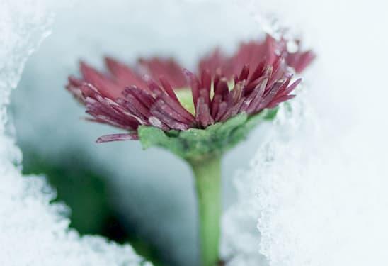 Кріосауна – екстремальний холод